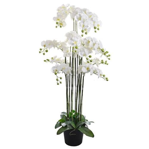 Artificial Potted Prestige Orchid White 152cm