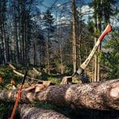Hand Tools for Forestry Work and Tree Felling