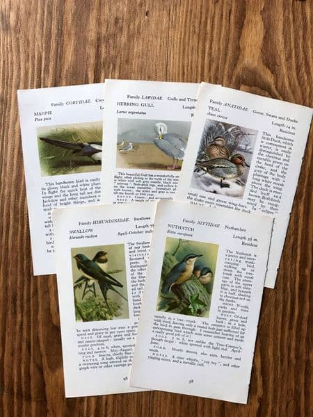 5 - Birds - Observer Book Pages