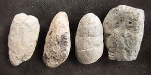 FOUR COPROLITES FROM THE JURASSIC OF CHURCH CLIFF BAY, LYME REGIS.